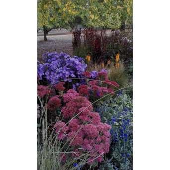 Fiori prima rosa scuro, poi color mattone da Ottobre