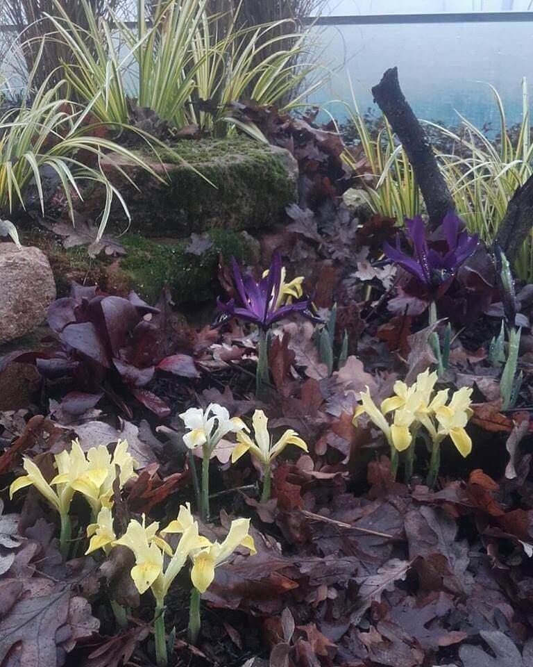 Fitoterapici naturali e lotta biologica per le erbacee perenni for Giardino invernale